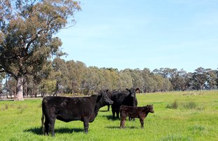 Picture of Lot 20 Kellys Lane, Violet Town VIC 3669