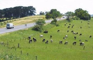 Picture of 710 Korumburra-Warragul Road, Ranceby VIC 3951
