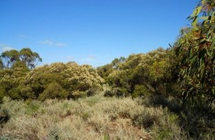 Picture of Lot 1 Havelberg, Black Hill SA 5353
