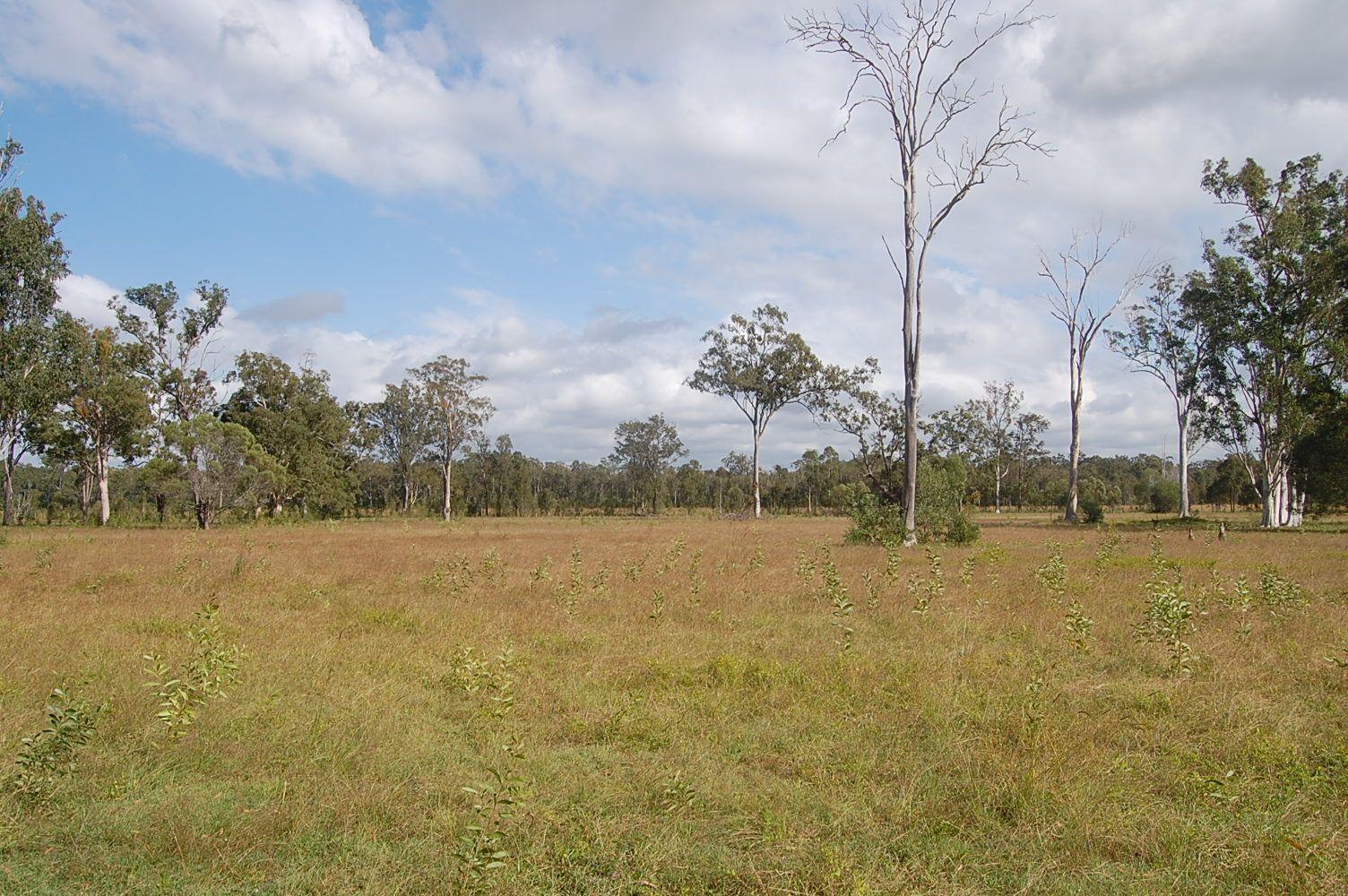 204 Mothersoles Rd, Ellangowan NSW 2470, Image 1