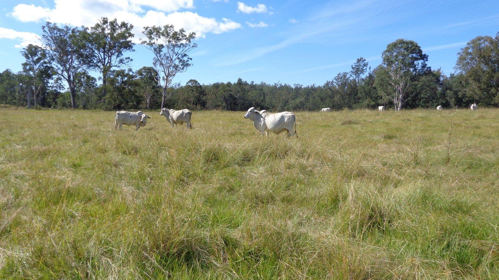 Grafton NSW 2460, Image 2