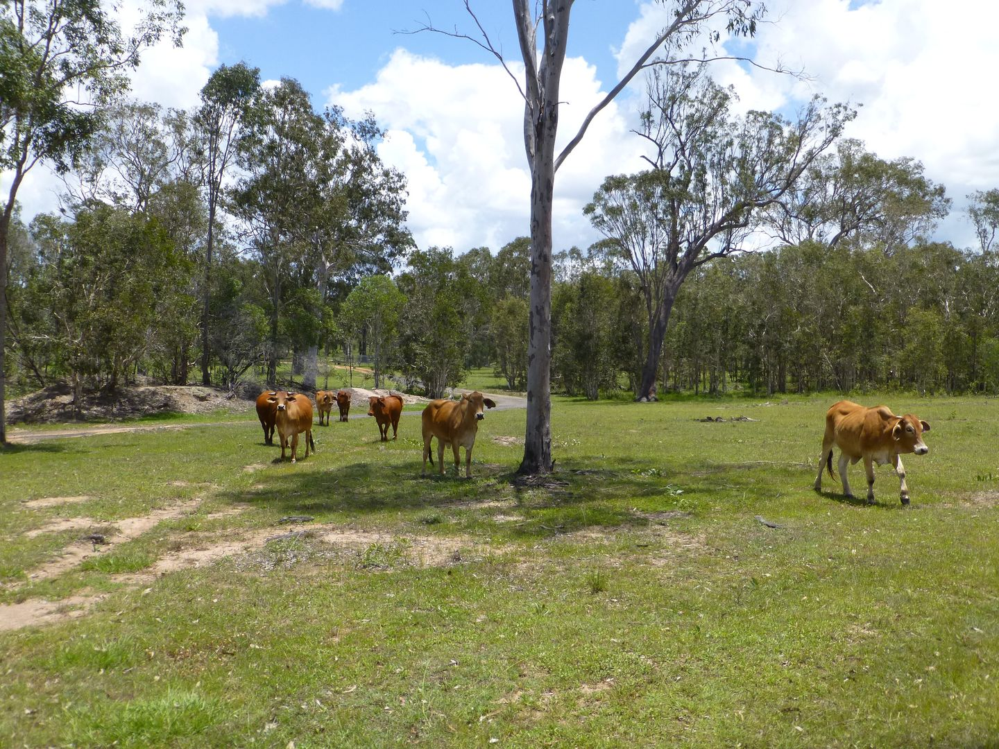 27369 BRUCE HIGHWAY, Isis River QLD 4660, Image 1