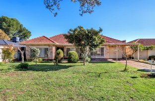 7 Greenwillow Ave, Paradise SA 5075