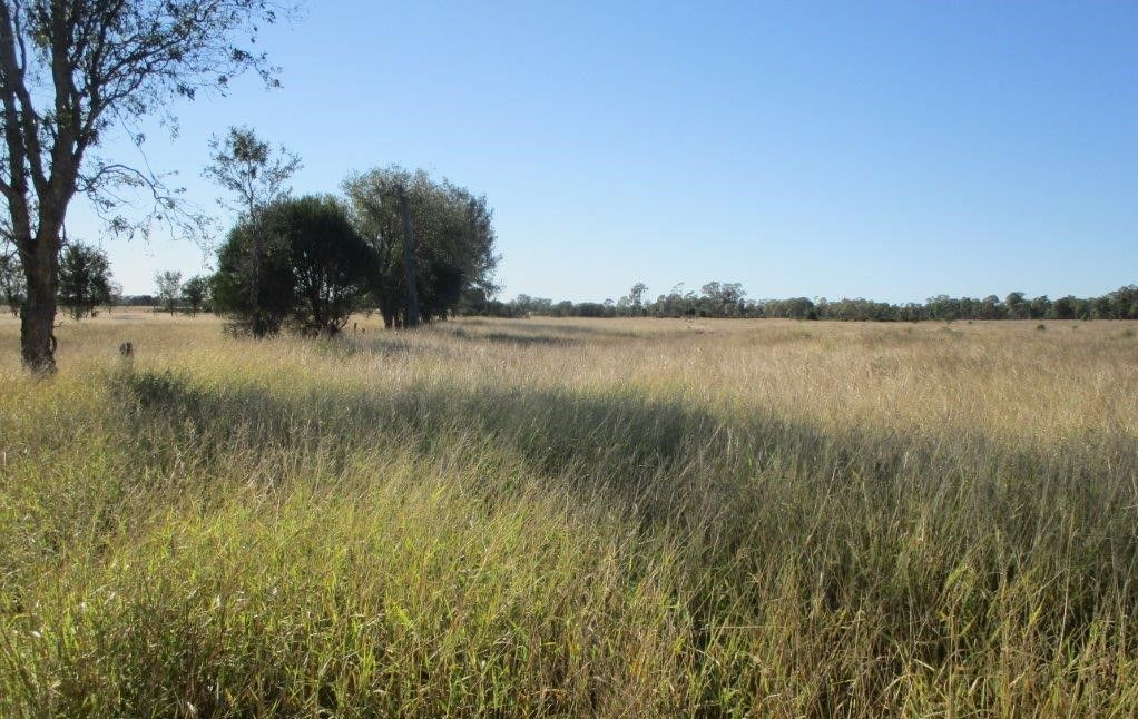564 ACRES, Jandowae QLD 4410, Image 0
