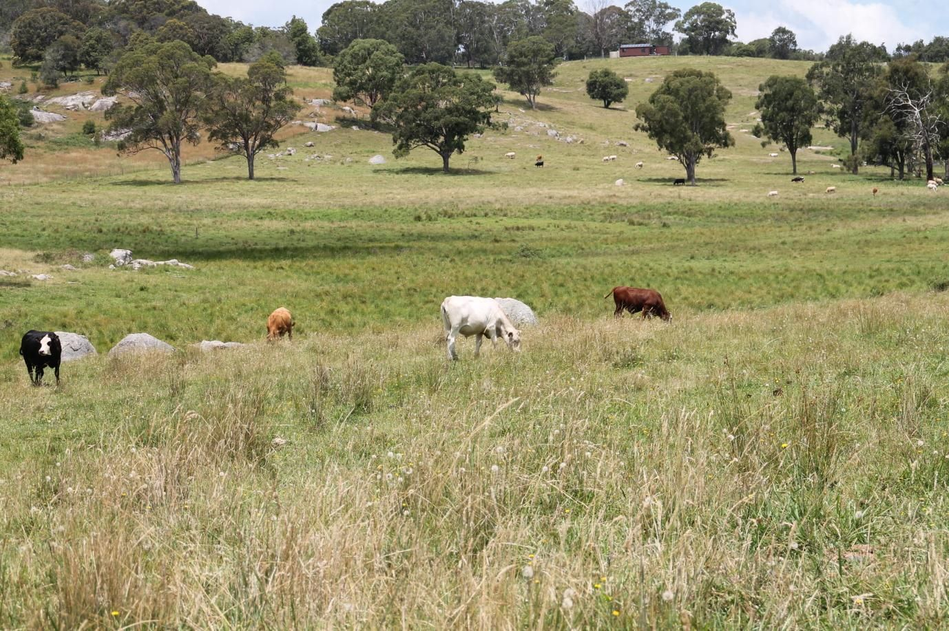 2875 Mount Lindesay Road, Tenterfield NSW 2372, Image 1