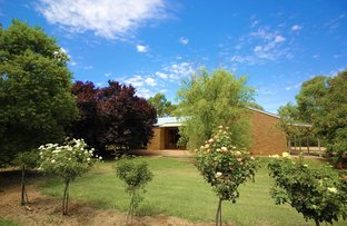 Picture of 365 Chowilla St, Renmark West SA 5341