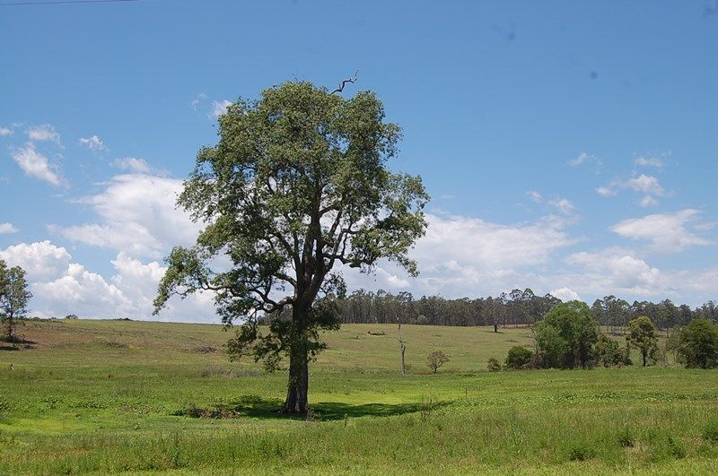 1695 Upper Mongogarie Road, Mongogarie NSW 2470, Image 0