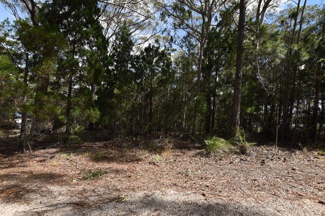 Picture of 10 Callistemon, RUSSELL ISLAND QLD 4184