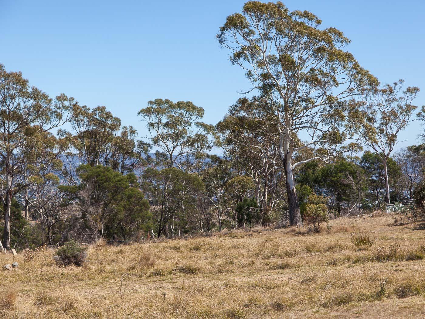 17 Escarpment Drive, St Leonards TAS 7250, Image 2