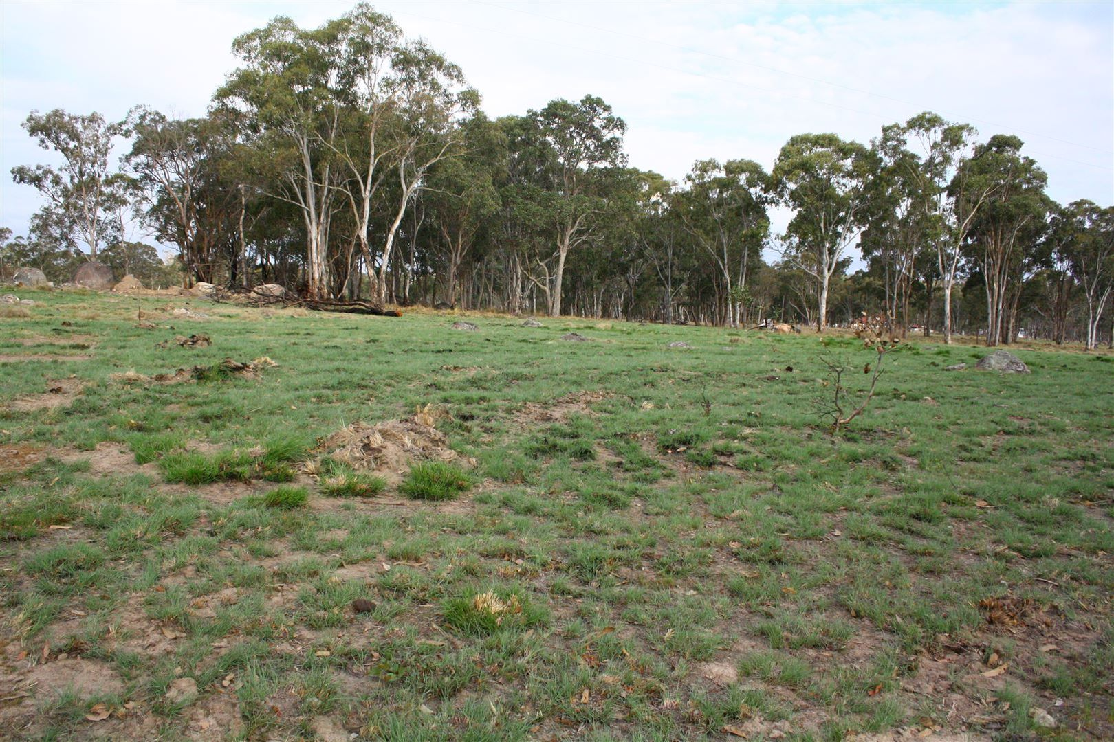 Lot 542 Geyers Road, Tenterfield NSW 2372, Image 1