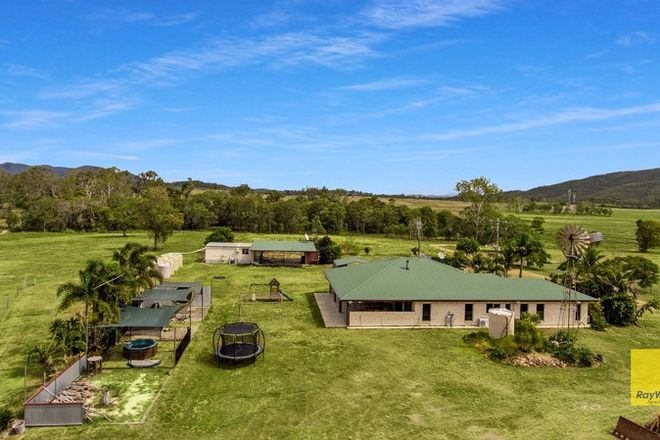 Picture of 537 Hallorans Road, MOUNT TOM QLD 4677