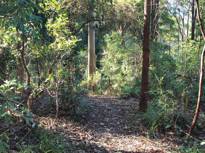 5 Orchis Drive, Tamborine Mountain QLD 4272, Image 2