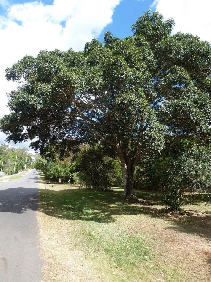 Tanah Merah QLD 4128, Image 2