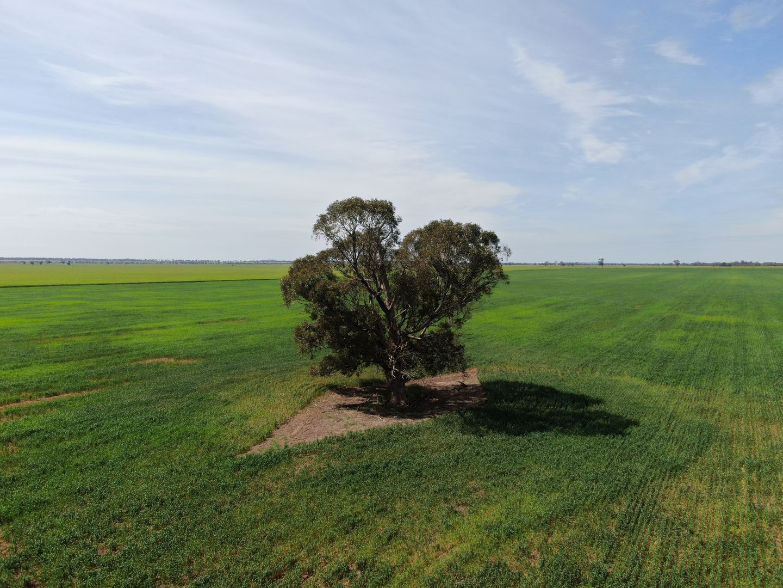 1842 Matong North Road, Cowabbie NSW 2652, Image 0