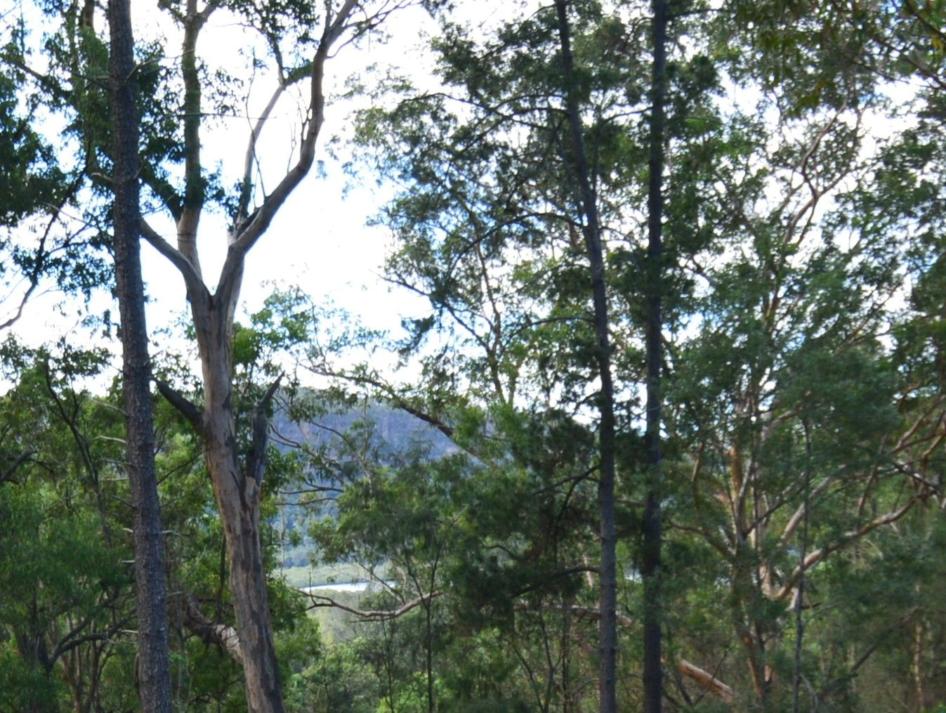 4814 Wisemans Ferry Road, Spencer NSW 2775, Image 1