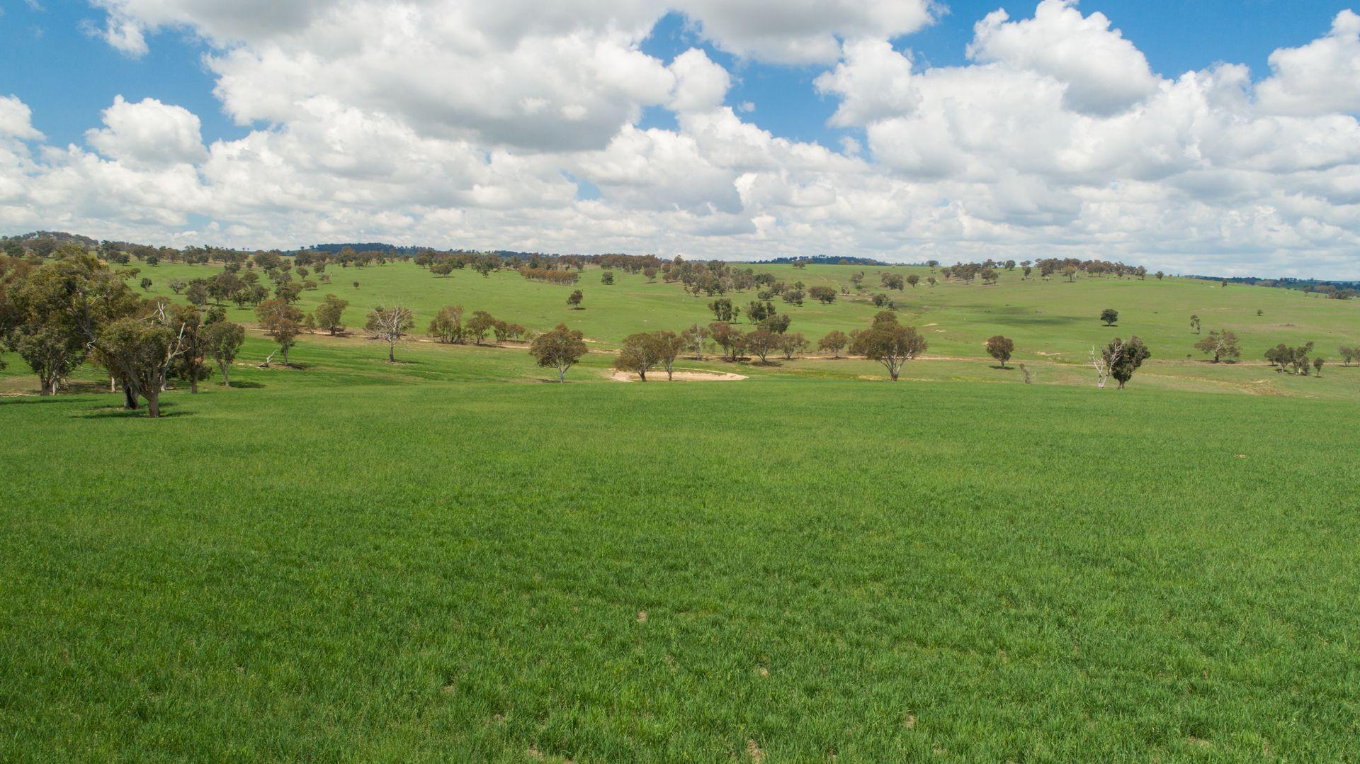 127 Surveyors Creek Rd, Woolbrook NSW 2354, Image 2