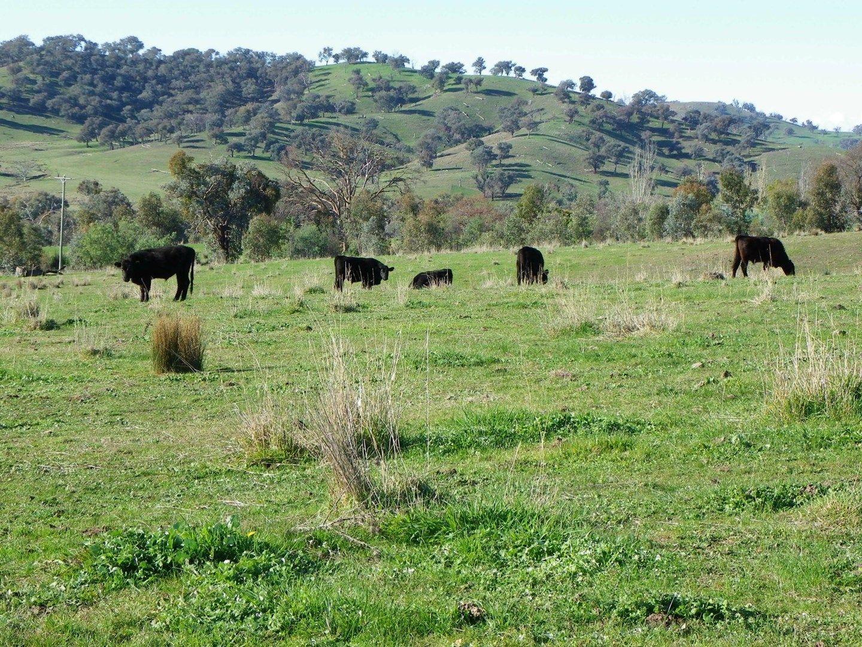 Woomargama NSW 2644, Image 0