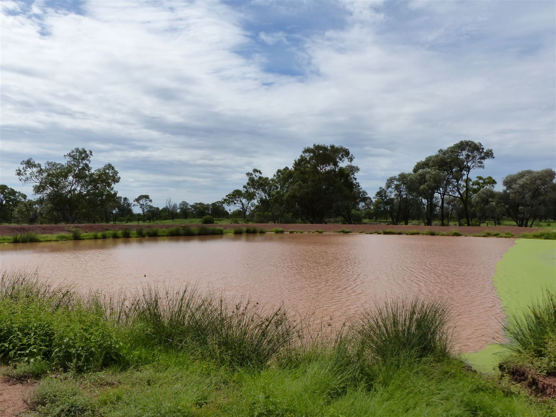 """""""Idaylia"""" 5129 Warrego Highway, Mungallala QLD 4467, Image 0"""