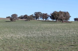 Picture of 1380 Brawlin Rd, Cootamundra NSW 2590