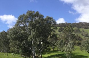 Picture of 1695 Highlands Road, Whiteheads Creek VIC 3660