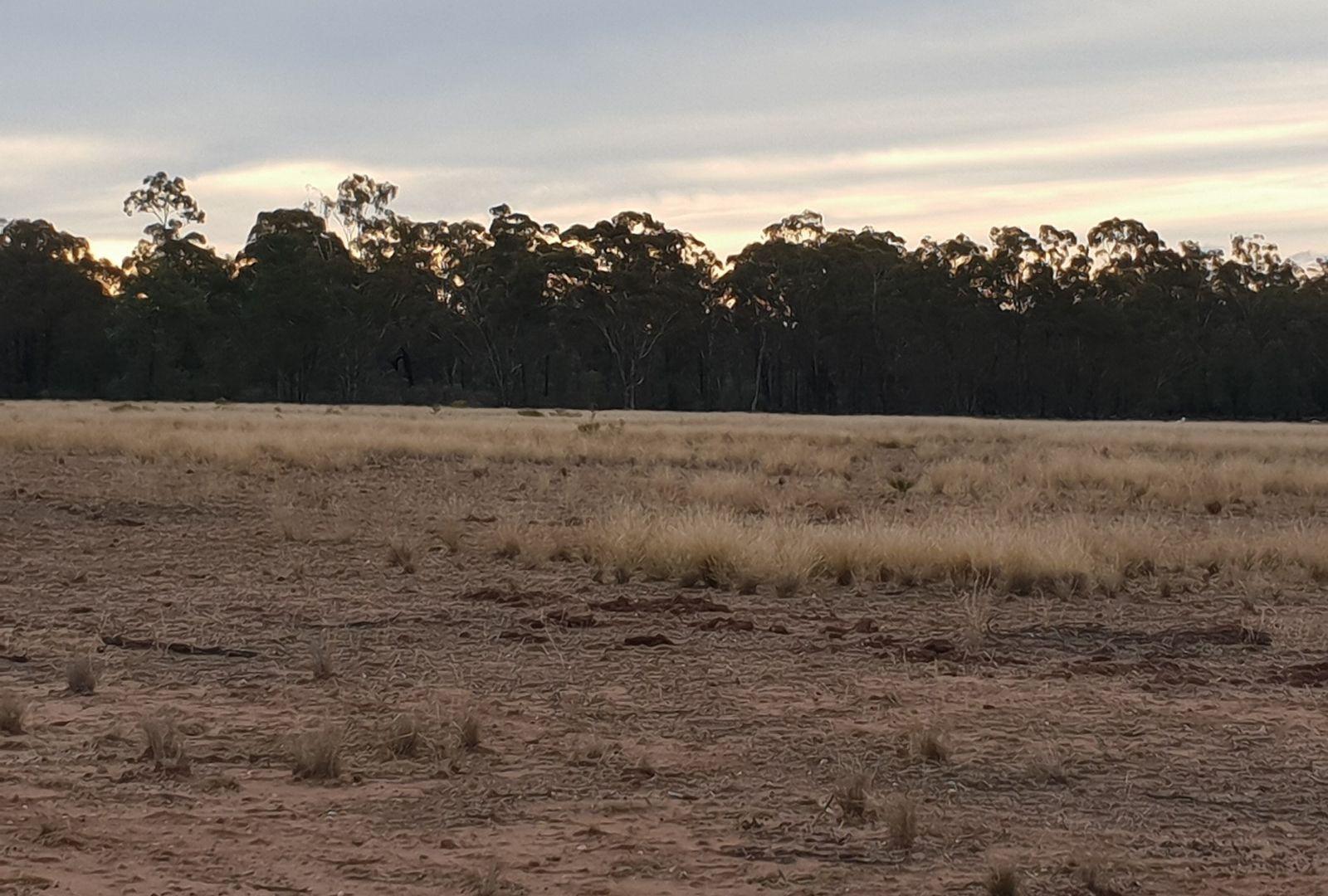 Fox Dale, Gilgandra NSW 2827, Image 1