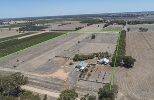 Picture of 117 Tandarra Road, Moama NSW 2731