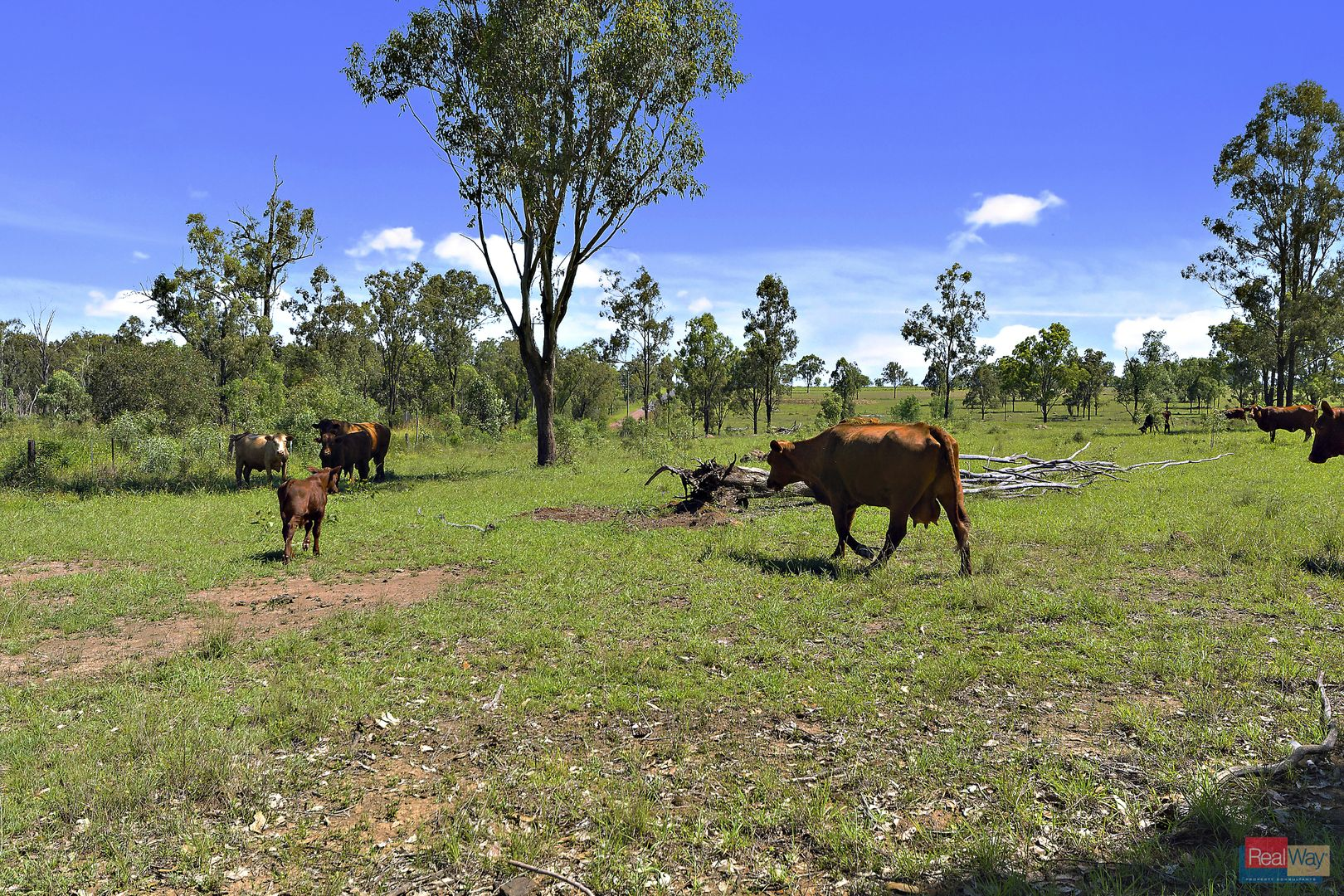 202-284 Kuss Road, Lanefield QLD 4340, Image 2