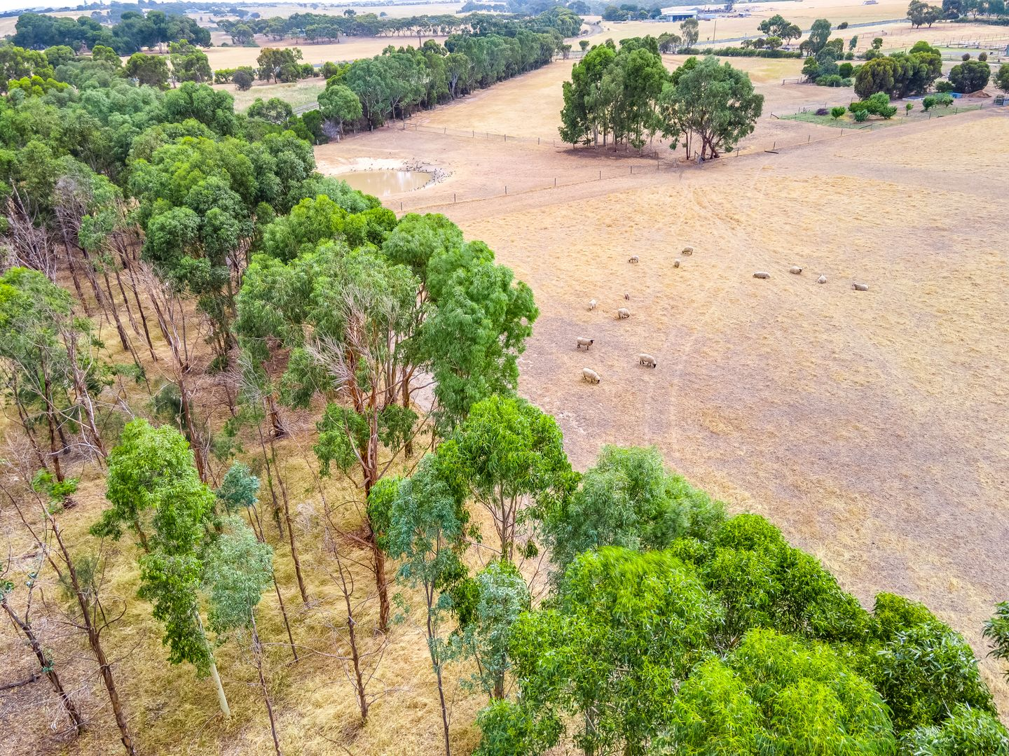 Lot 313 Wellington Road, Currency Creek SA 5214, Image 2