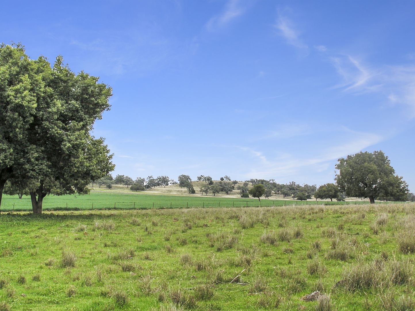 "276 Walls Rd ""Wandaree"", Gunnedah NSW 2380, Image 1"