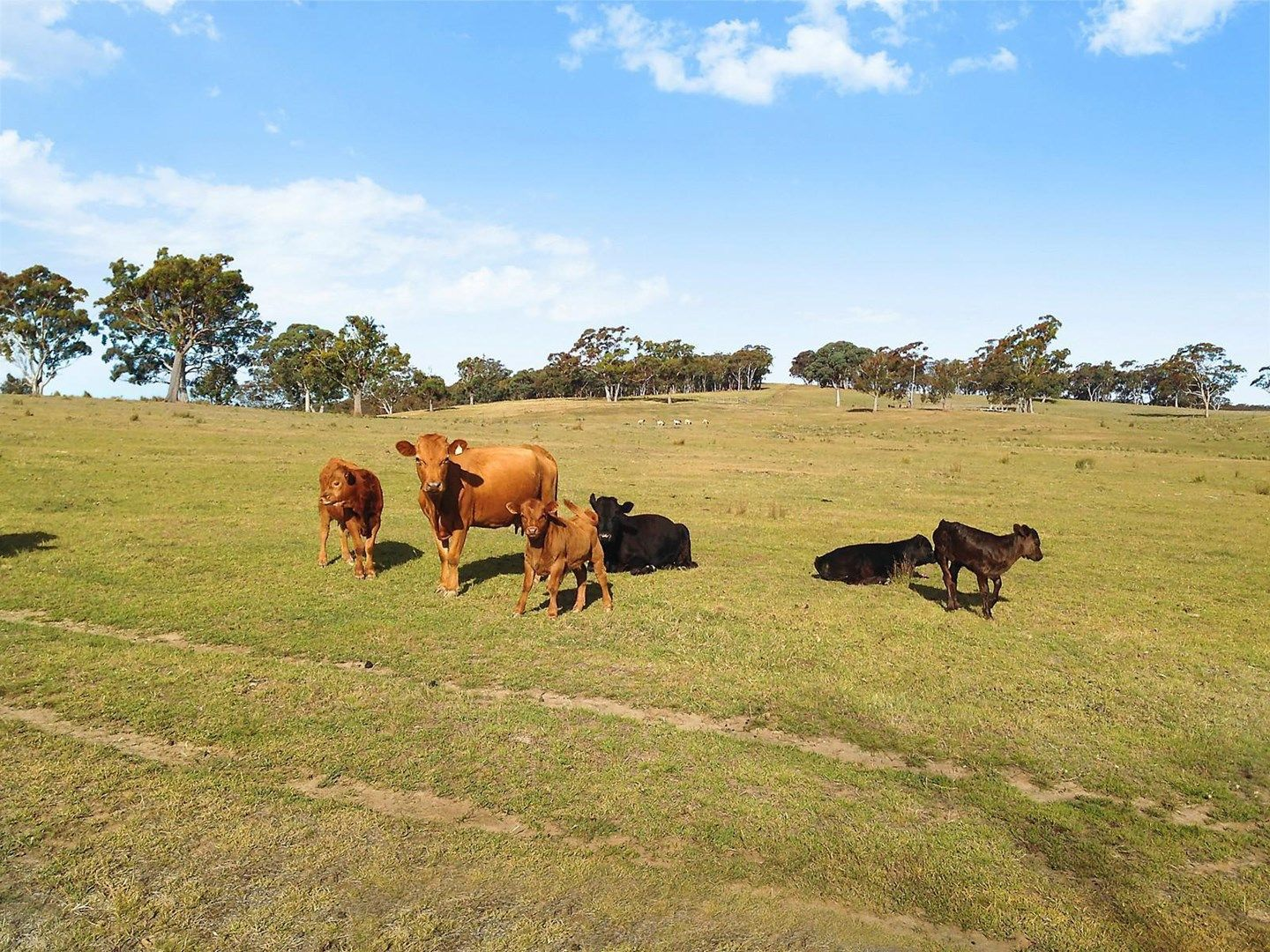 Proposed Lot 2/840 Marked Tree Road, Gundaroo NSW 2620, Image 2