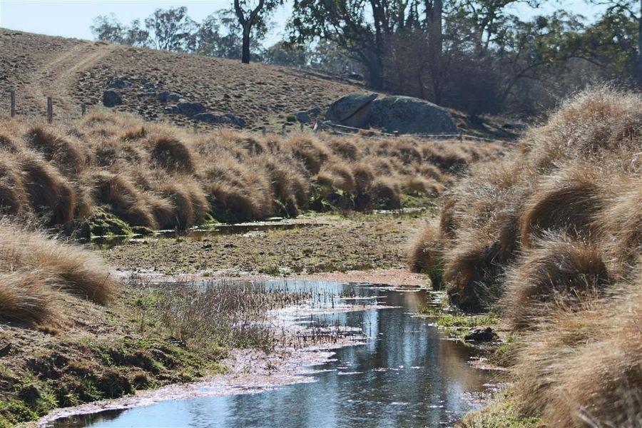 11460 Bruxner Highway, Tenterfield NSW 2372, Image 1