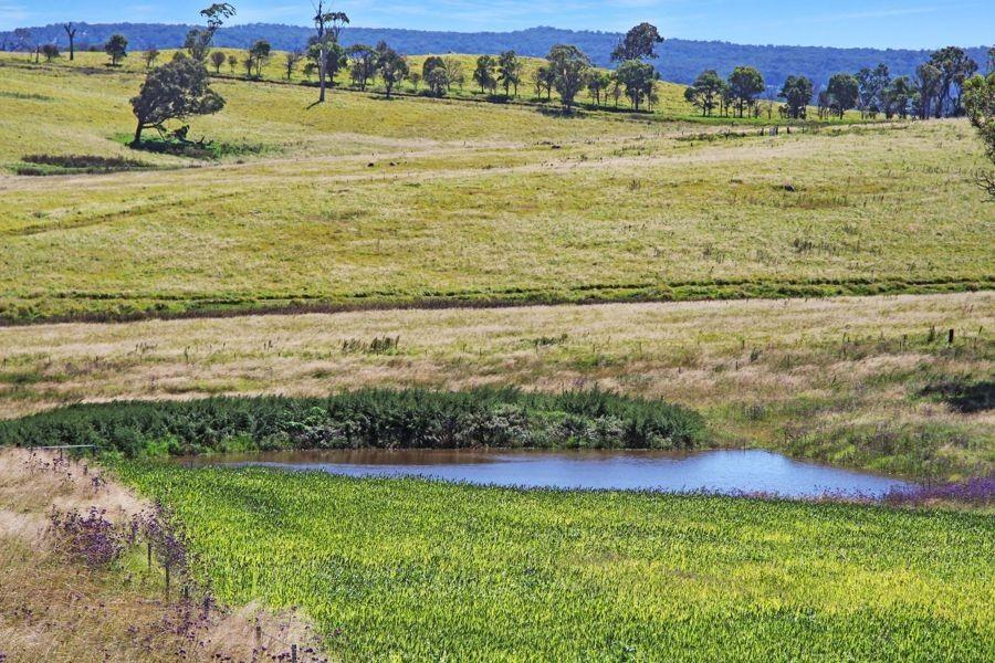 79 Bryans Gap Road, Tenterfield NSW 2372, Image 0