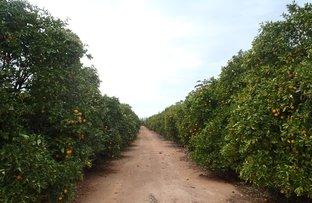 Farm 738 Whitton Rd, Wamoon NSW 2705