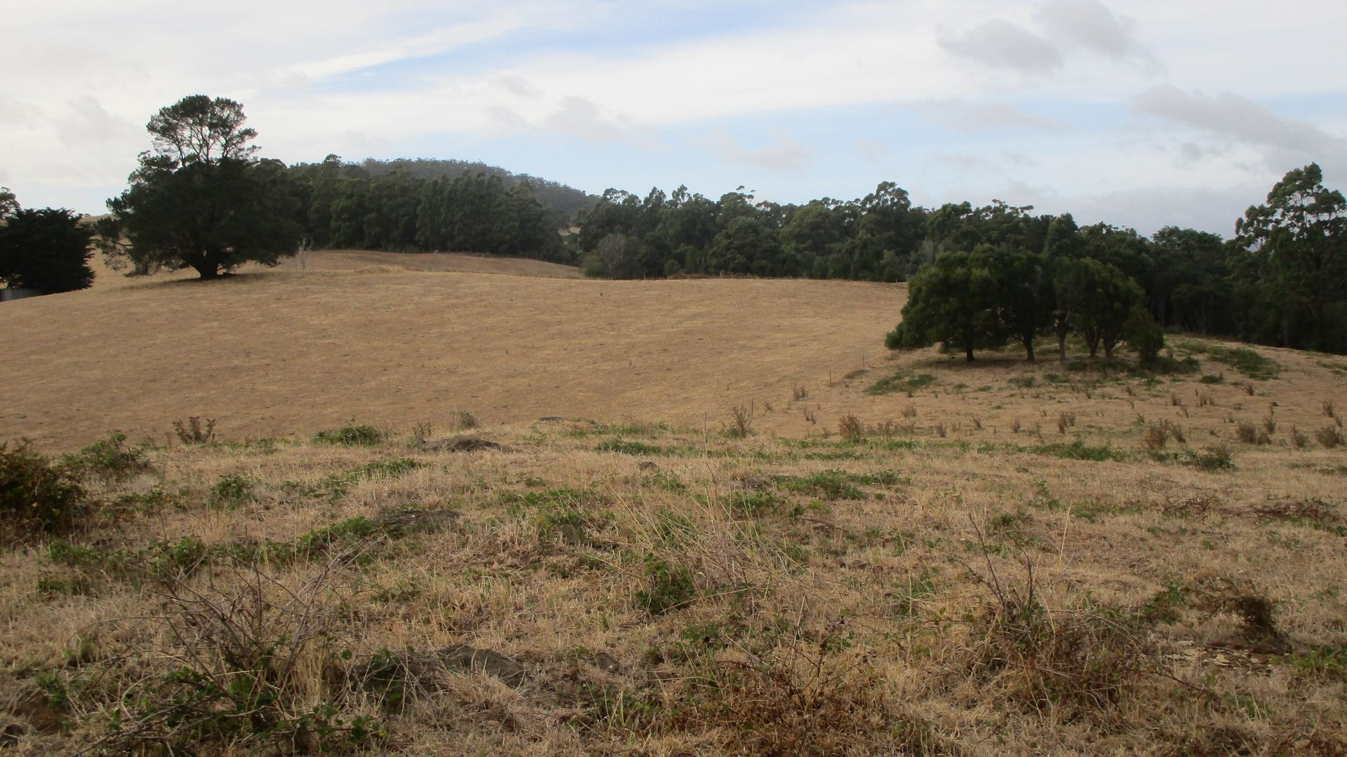 - Bretts Road, North Motton TAS 7315, Image 2