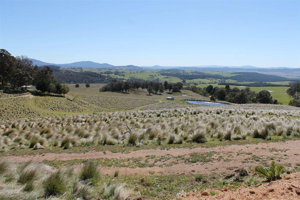 Braidwood NSW 2622, Image 1