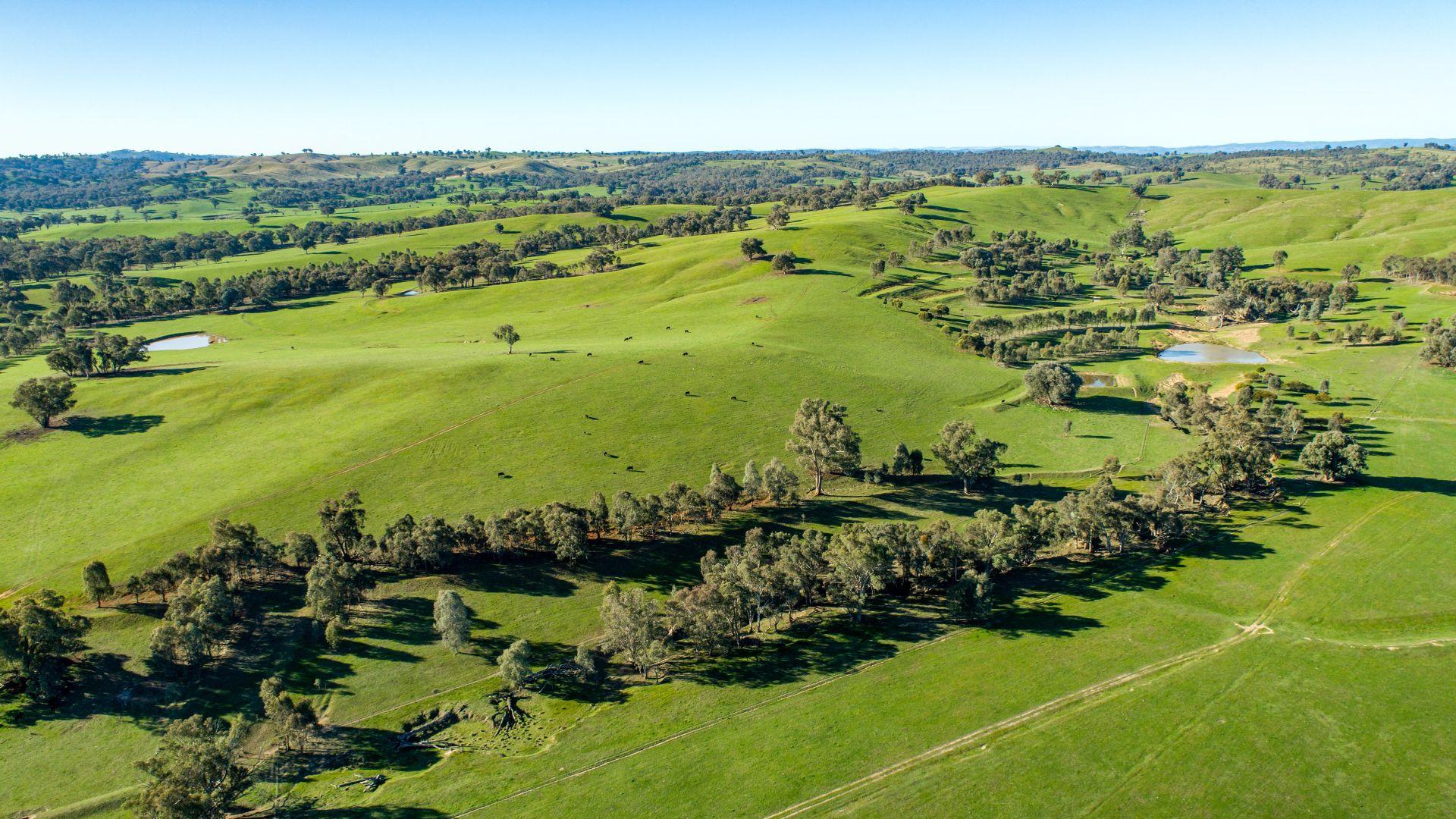 Tumbarumba Road, Wagga Wagga NSW 2650, Image 2