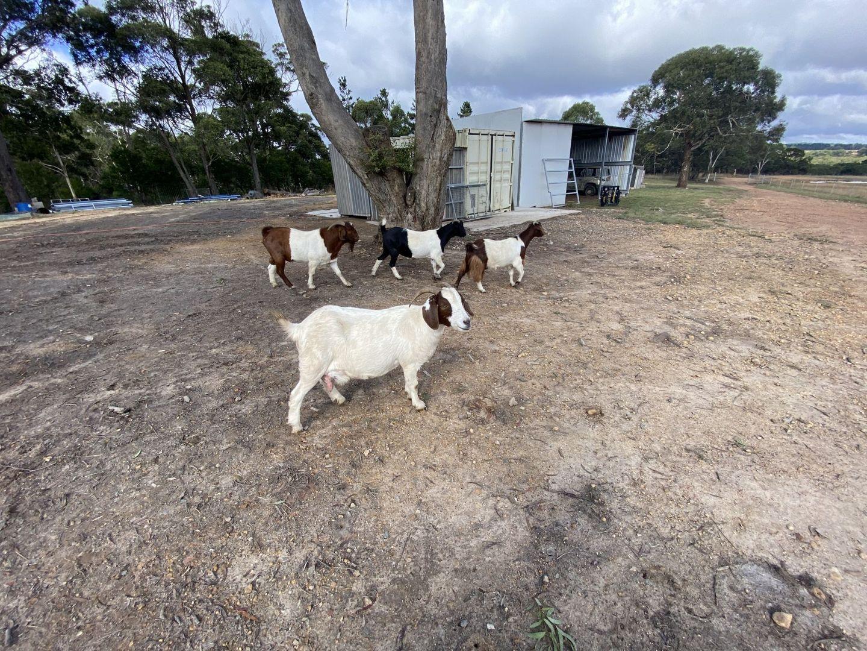 15 Avondale Road, Mongarlowe NSW 2622, Image 1