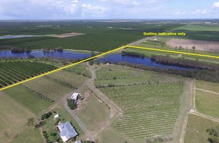 81 Bongiolettis Road, Welcome Creek QLD 4670
