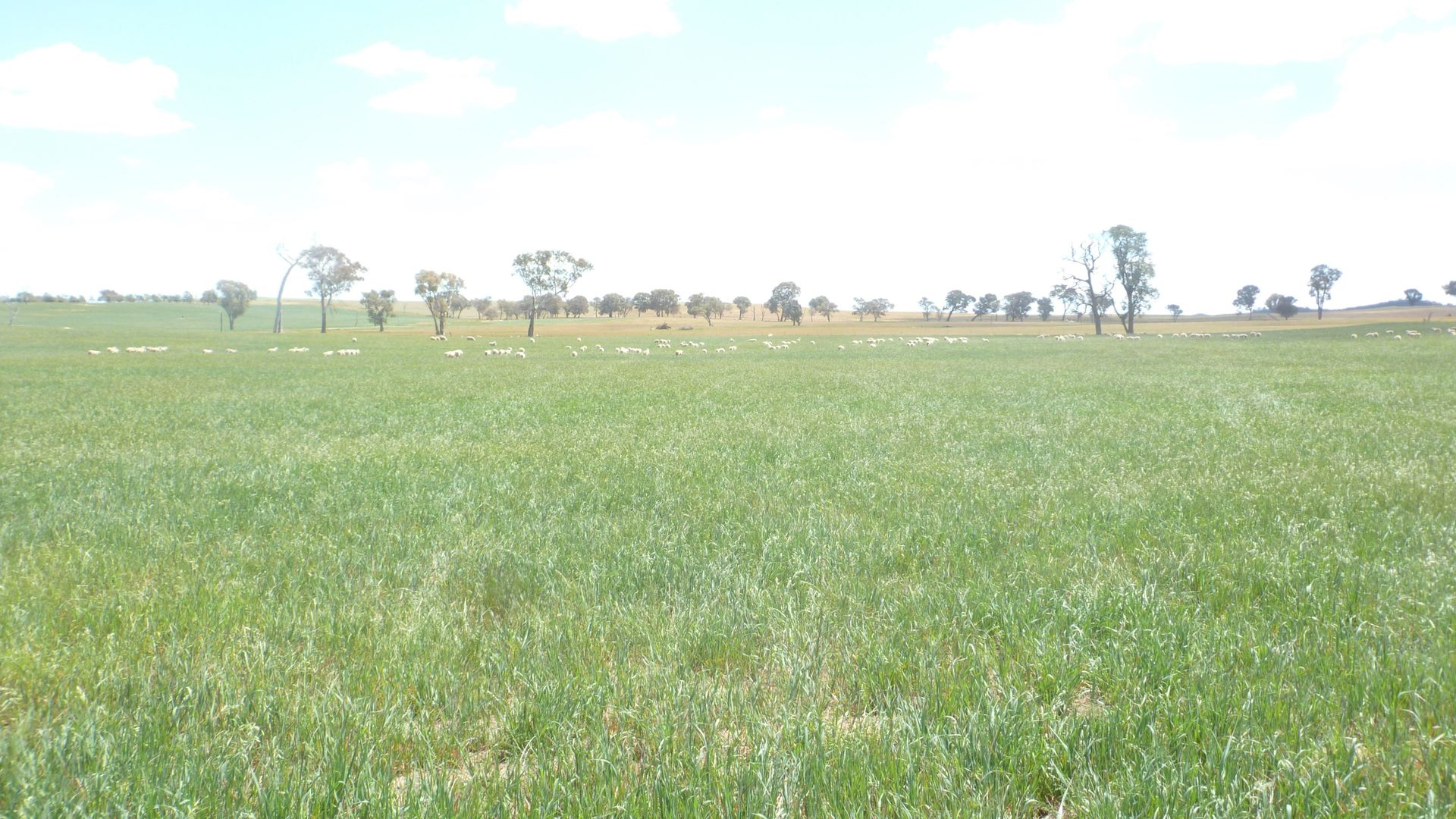 894 Little Plains Road, Boorowa NSW 2586, Image 2