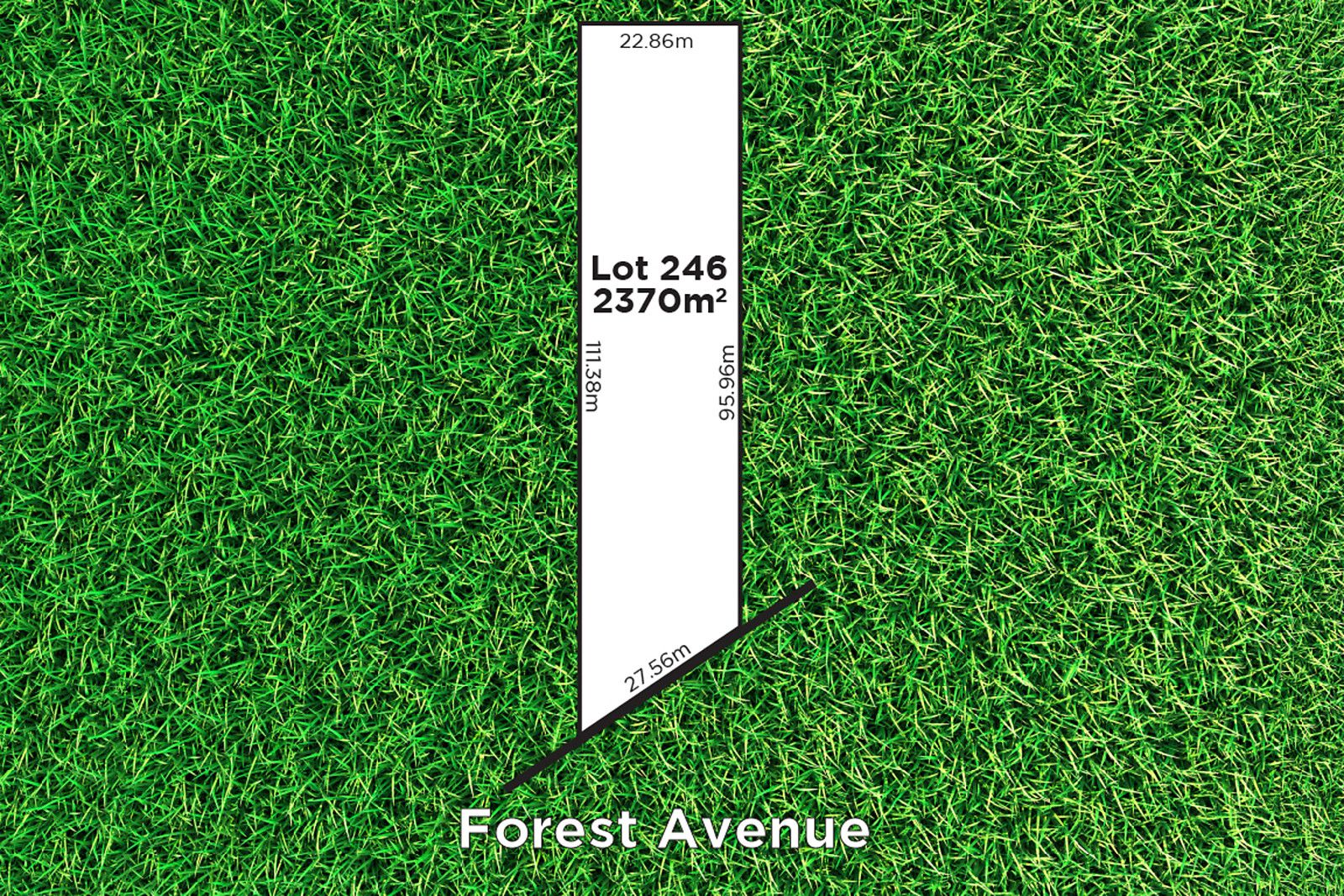 20 Forest Avenue, Hawthorndene SA 5051, Image 0