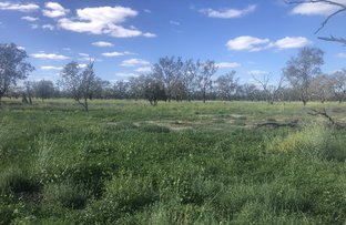 Picture of . Merrinong, Brewarrina NSW 2839
