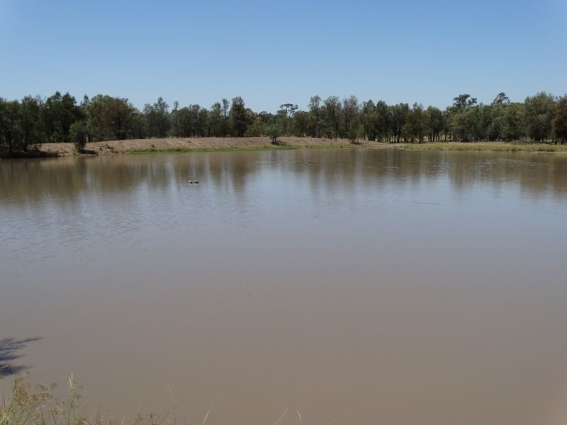 120 Acres - 943 Wieambilla Road, Chinchilla QLD 4413, Image 2