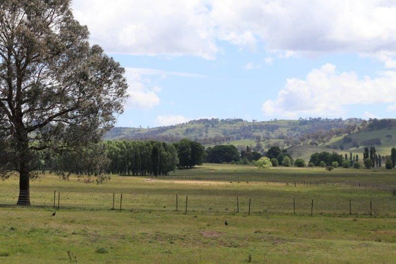 'Camlea'/3214 Mount Mitchell Road, Glencoe NSW 2365, Image 2