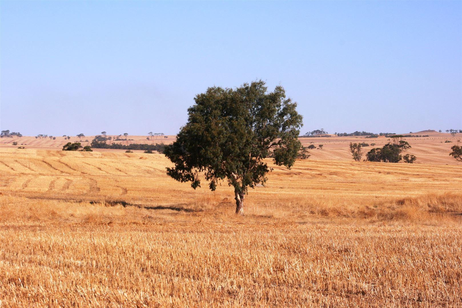 1400 Northam-Pithara Road, Jennapullin WA 6401, Image 2