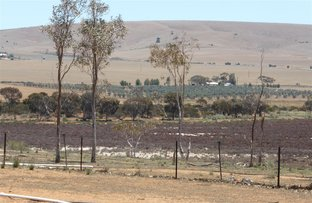 Picture of Lot 65 Lower Templeton road, Whitwarta SA 5461