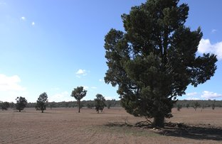 Picture of Barellan Road, Narrandera NSW 2700