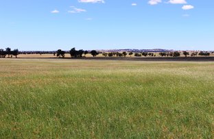 Campbells Ln, Coolamon NSW 2701