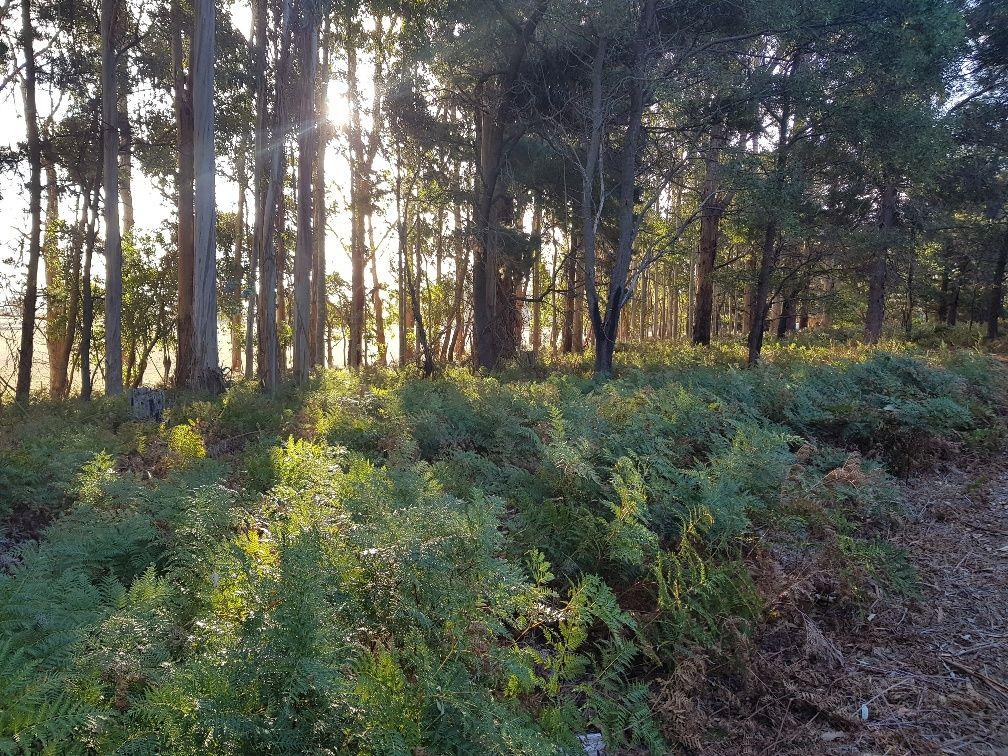 188 Kennedy Road, Tantanoola SA 5280, Image 2