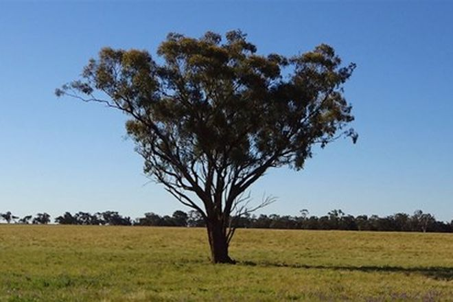 Picture of . East Gathen, DENILIQUIN NSW 2710