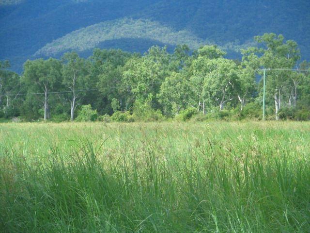 Majors Creek QLD 4816, Image 0